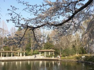 栃木県中央公園3/31