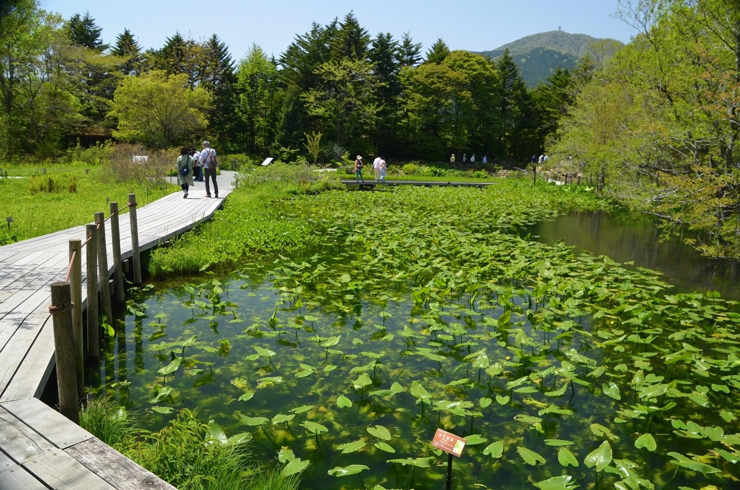 DSC_0304 (1)湿生花園