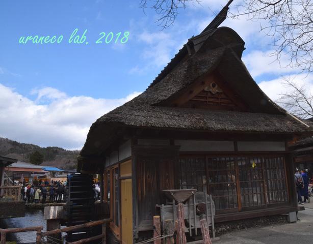 3月19日忍野八海6