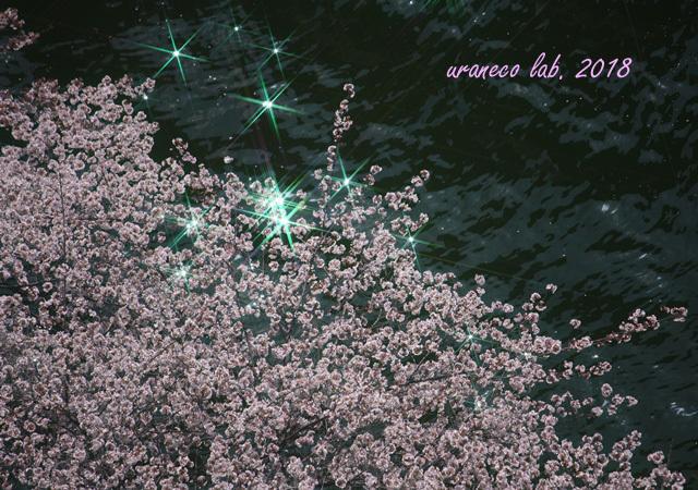 4月4日目黒川の桜