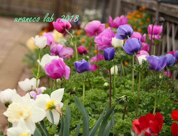 4月6日花咲く庭