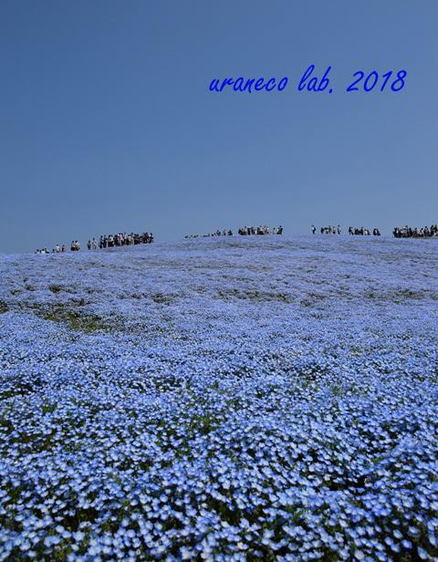 4月23日ネモフィラの丘7