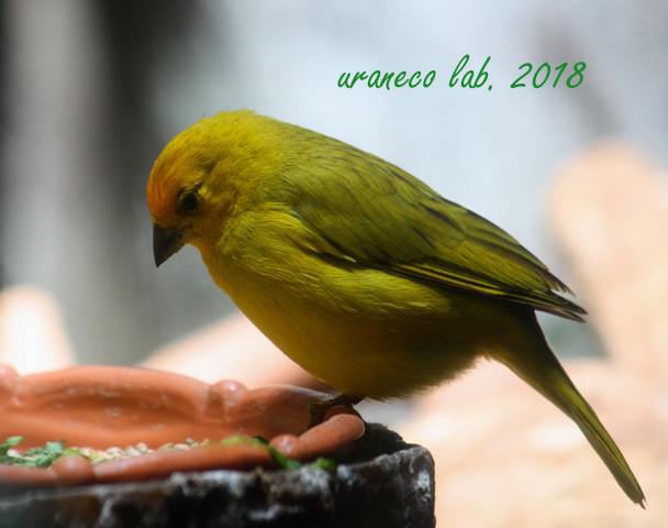 4月18日ガイジンの鳥2