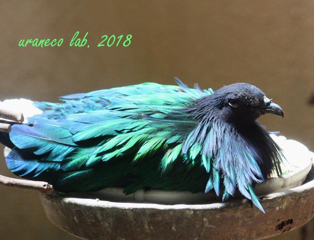 4月18日ガイジンの鳥3