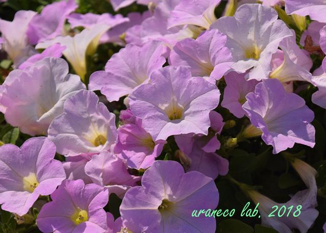 4月24日桃色の海3