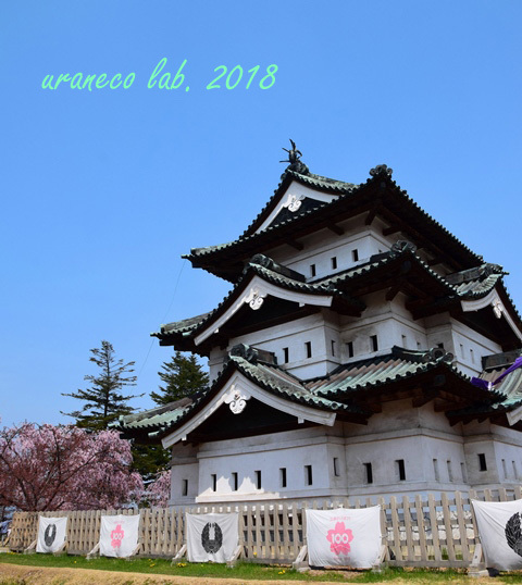 5月1日弘前城と枝垂桜2