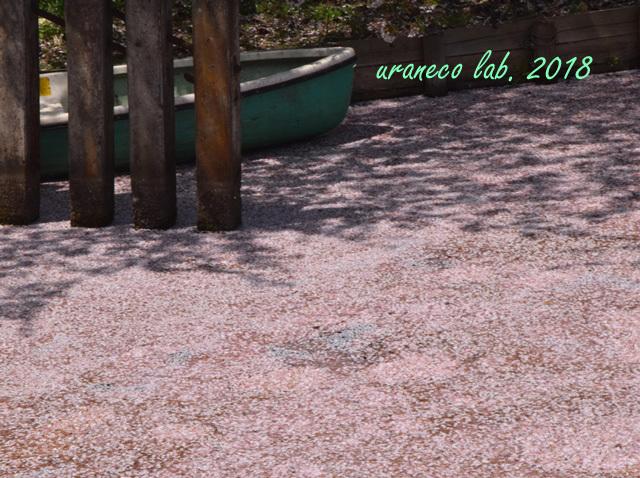 5月2日弘前公園花筏
