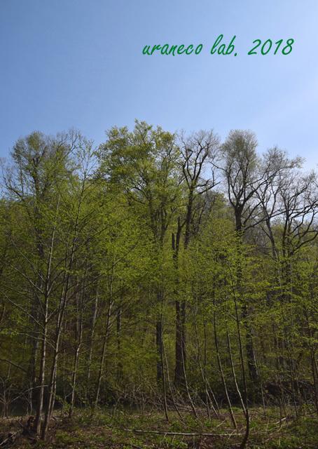 5月7日早春の奥入瀬渓谷