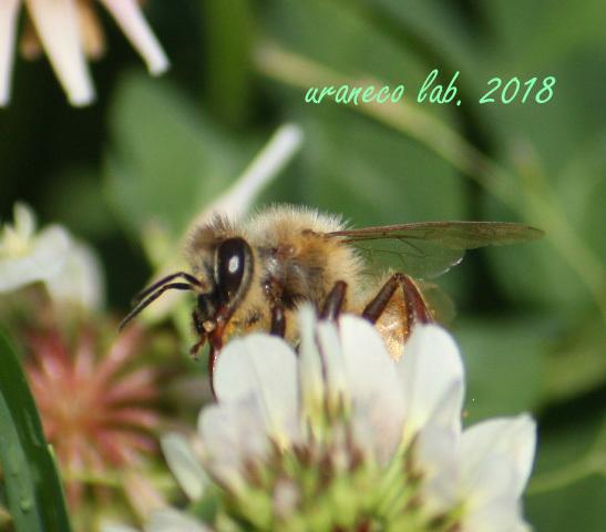5月14日ミツバチ