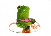 frog-3167466_1280.jpg