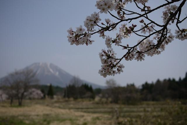 s-12:42桜