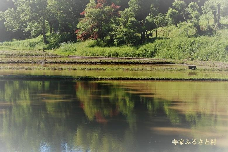 20180520寺家ふるさと村-1a