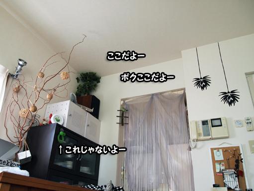 P4043537.jpg