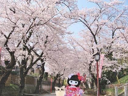 桜のお寺お散歩