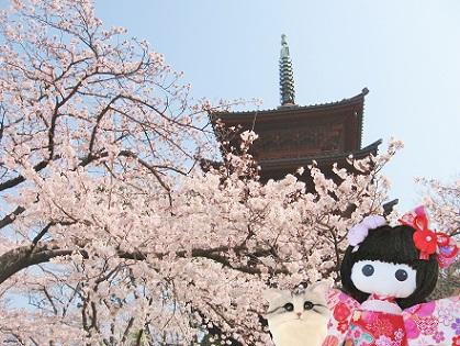 五重塔が桜で見えません