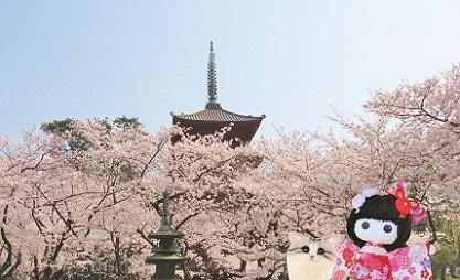桜寺 満開です