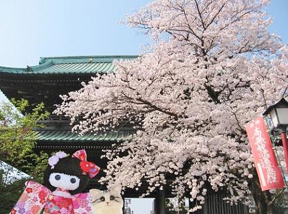 桜のお寺お散歩 a