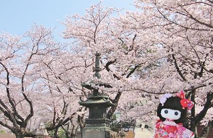 桜の灯篭も綺麗です