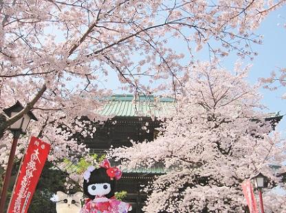 本日のおまけは 桜のお寺