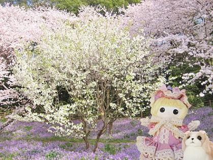 桜とハナナのビューポイント