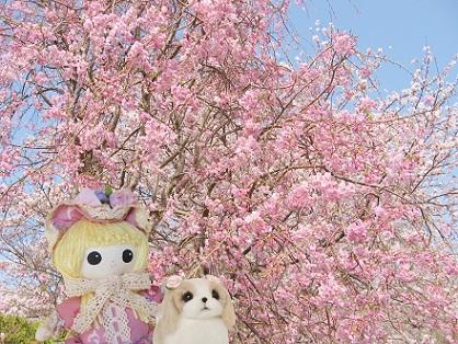 ピンクのしだれ桜さんです