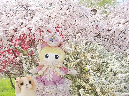 モモと桜と雪柳です