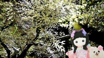 またね 千鳥が淵の夜桜
