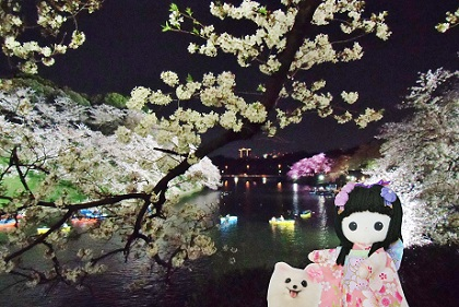 ピンクの夜桜が見えます