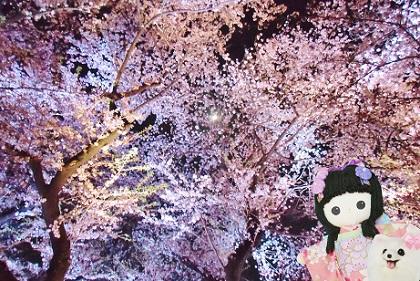 ピンクの夜桜と月です