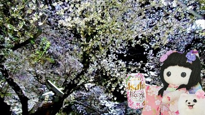 asahi 桜の宴です