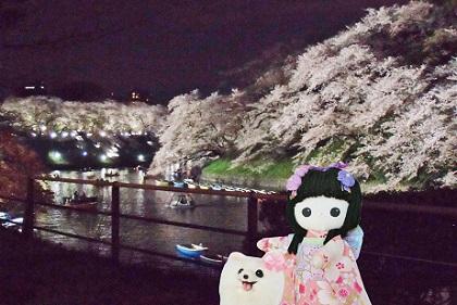 幻想的な夜桜です