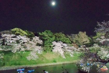 月夜の千鳥が淵です