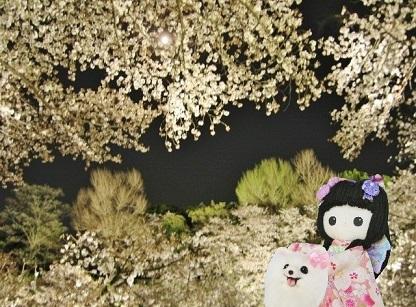 月が輝く夜桜です