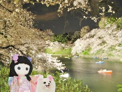 夜桜の中のボートです