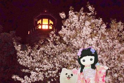 千鳥が淵の夜桜です