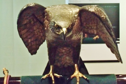 何かを見つけた鷹