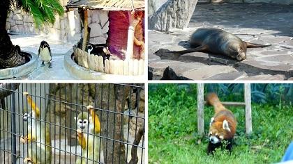 行船公園の動物さん達2018a