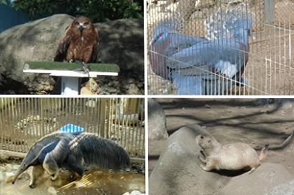 行船公園の動物さん達2018b