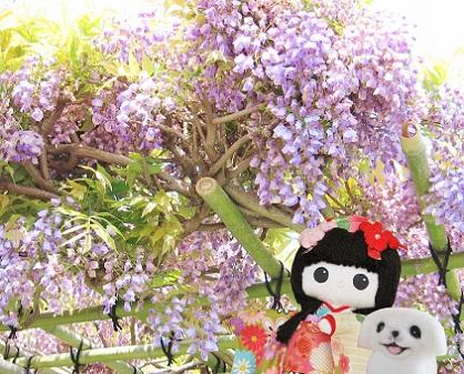 藤のお花も少しありました