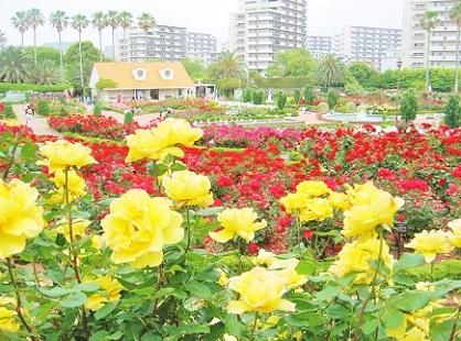 谷津バラ園 景色2018