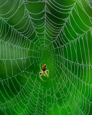 クモの巣.