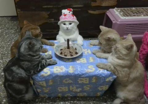ネコの 誕生パーティー ケーキと ロウソク