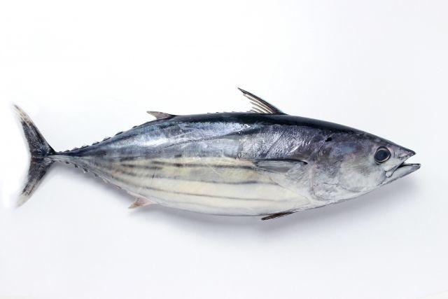 えっ? 「新鮮な魚の方がおいしい」は間違いだった?-熟成で増すうまみ