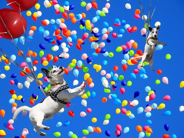 八犬士 飛ぶ犬