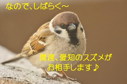 030_20180418202048e7f.jpg