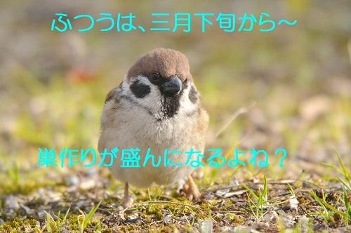 040_20180328200611594.jpg