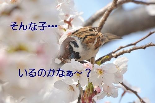 040_2018032920124462a.jpg