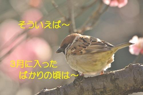 090_20180403030010b66.jpg