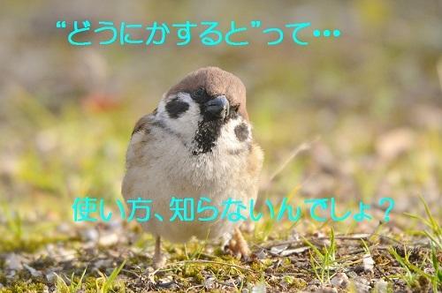 100_20180328200815ac1.jpg