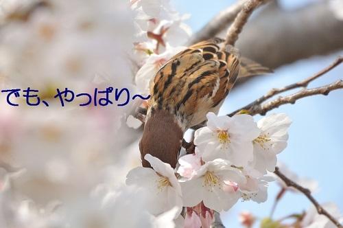 100_20180329201347359.jpg
